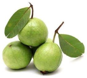 Fresho Guava 500 g