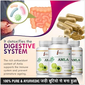 Inlazer Amla Herbal Capsules For Protects Body Against Infection 500mg 100% Ayurvedic