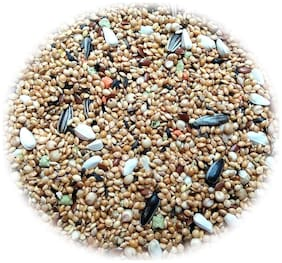 Jainsons Kangni Sunflower And Safflower Mixed Seeds Bird Food (800 g)