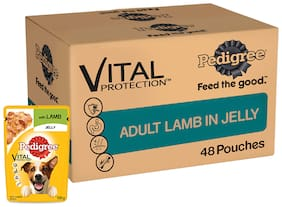 Pedigree Vital Protection, Adult Lamb in Jelly Wet Dog Food, 100 g (Pack of 48)