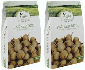 YUVIKA Paneer Dodi | Paneer Ke Phool - Withania Coagulan (250 g) (Pack of 2)