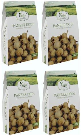 YUVIKA Paneer Dodi | Paneer Ke Phool - Withania Coagulan (250 g) (Pack of 4)