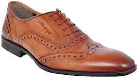 ALLEN COOPER Oxford brogue Bunished Brown Pure Leather Formal Shoes For Men