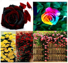 4 Variety Rose Flower Plant Seeds rare and imported