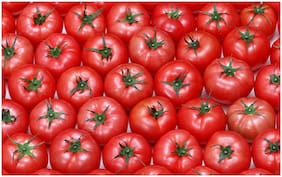 5 Ace tomato Sticker Poster|Kitched decor|Food Posters|size:12x18 inch