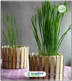 Air Purifying Indoor Plant Chives Herb Seeds For Home Garden Perfect Home Garden Plant Seeds