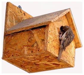 Amijivdaya Sparrow home No 1