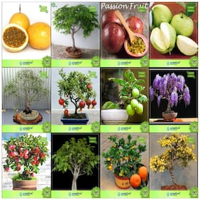 Bonsai Suitable Seeds : Seeds For Planting Combo Passion Fruit - Yellow