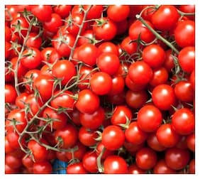 Cherry Tomato Hybrid Multi-x Quality Seeds For Kitchen Garden - Pack of Above 50 Seeds