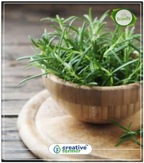 Cureall Herbal Aromatic Seeds Herb Seeds For Planting Perfect Home Garden Plant Seeds