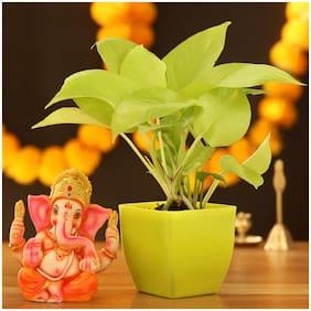 Ferns N Petals Golden Money Plant & Lord Ganesha Idol|Diwali | Diwali Gift |Bhaidooj|New Year