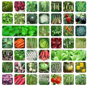 Flare Seeds 45 Variety (2550+ Seeds) Of Vegetable Seeds