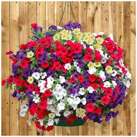 Flower Seeds : Petunia-Mixed Home Gardening Seeds Plant Seeds For Pot Gardening Garden [Home Garden Seeds Eco Pack] Plant Seeds By Creative Farmer