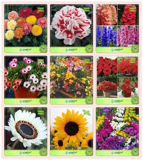 Flower Seeds : Seeds For Flowering Plants Combo Daisy-Double