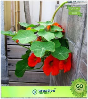 Flowering Plants For Summer : Nasturtiums In Baskets Premium Kitchen Garden Plant Seeds