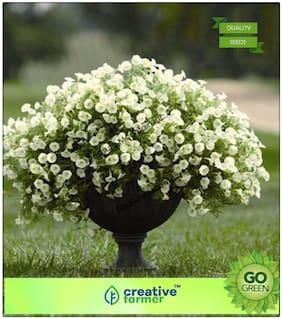 Flowering Seeds : White Petunia Premium Kitchen Garden Plant Seeds