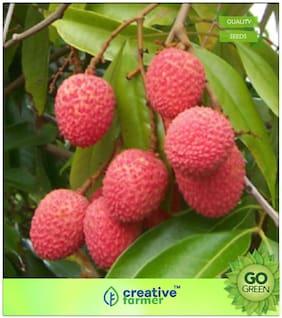 Fruit Seeds : Leechee Premium Kitchen Garden Plant Seeds