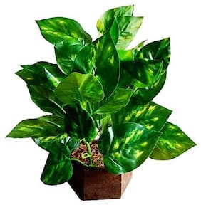 Green Plant Indoor Artificial Money Plant Bonsai