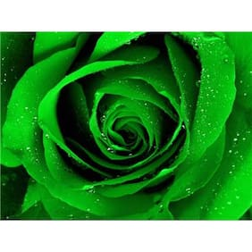 Green Rose Flower Seeds by National Gardens