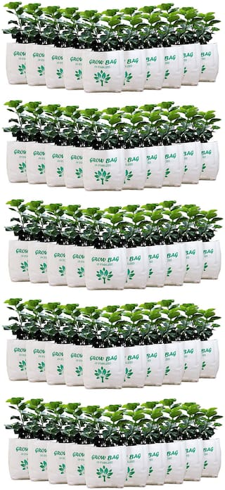 Grow Bag - UV Stabilized, Long Life Bags for Small and Medium Plants - 30 x 16 x 16 cm | Pack of 50 Bag