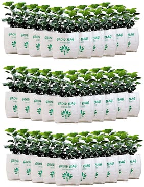 Grow Bags UV Stabilized (40x24x24 cm) | Pack of 30 Bags