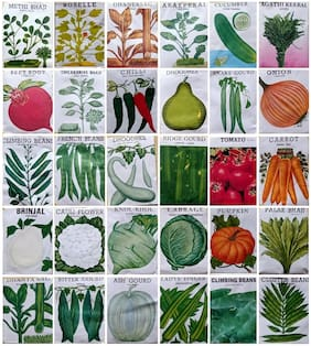 Grow Basket,30 Organic Vegetable seed,packets for terrace gardening.