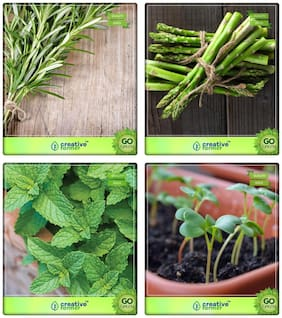 Herb Plants Seeds For Home Garden Rosemary;Asparagus;Mint;Cress Common Herb Seeds Combo Pack