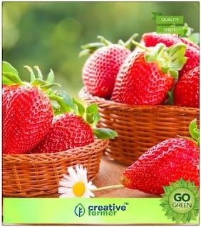 Herb Seeds For Garden : Alpine Strawberry Hybrid Premium Kitchen Garden Plant Seeds