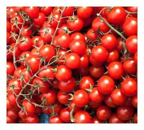 Hybrid Cherry Tomato Advance Seeds - Pack of Above 50 Seeds