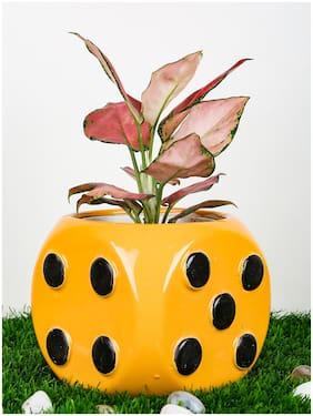 Just Originals Ludo Dana Shape Small Ceramic Flower Pot