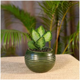 Kraftmania Ceramic Decorative Round Planter Pot For Indoor Outdoor Plant