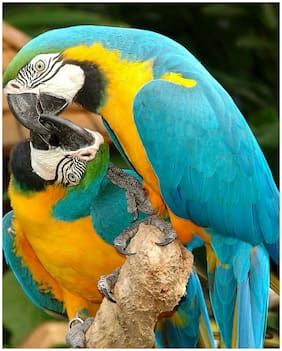 """Macaw Parrots wildlife  Art Print great wall hanging """"8x10""""decorations picture"""
