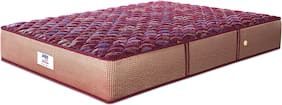 Peps Springkoil Bonnell Normal Maroon 72X30X06 Mattress With One Pillow
