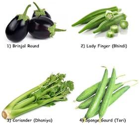 R-DRoz Combo of Hybrid Vegetables Seeds - Brinjal Round,Lady Finger(Bhindi/Okra),Coriander,Sponge Gourd