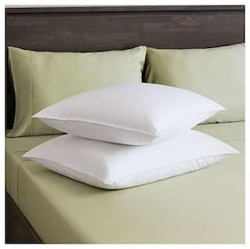 Royce Cotton Dream Pillow White (Pack of 2)