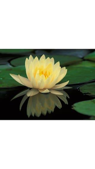 Buy saaheli lotus flower seed online at low prices in india saaheli lotus flower seed mightylinksfo