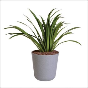 SERENO Plastic Grey Flower Pot & Planter ( 1 )