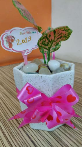 Sheel Green Gift Items for New Year with Plant and Decorative Pot