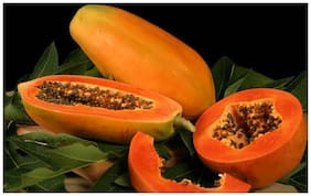 Taiwan Papaya Lady Hybrid Pappaya Seeds Fruit Seeds For Garden Fruit Seeds Garden Pack By Creative Farmer