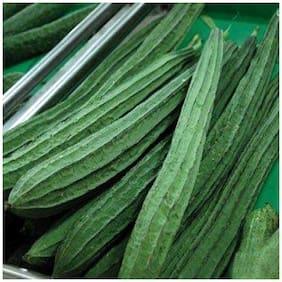 Vegetable Seeds : Ridge Gourd Seeds - Variety Jaipur Long For Terrace Garden-20 Seeds by Creative Farmer