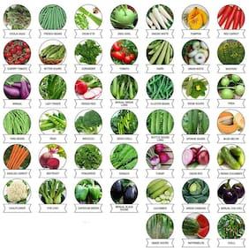 Vegetable Seeds Combo Pack of 45 Varities