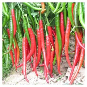 Vegetable Seeds Hybrid F1 G4 Green Long Chilli Vegetable Seeds