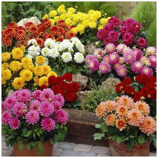 Winter 7 Types Combo Flower Seeds