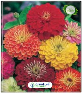 Zinnia Double Giant Mix Flower Seeds Seeds For Gardening Perfect Home Garden Plant Seeds