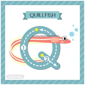 5 Ace Fish Alphbet Q For Quill Fish Wall Sticker Paper Poster
