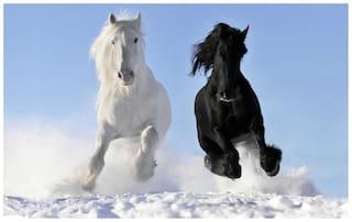 Horse sticker - horse stickers - running horse sticker - horse wall sticker - horse sticker for room