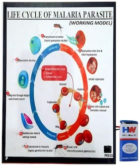 Life Cycle of Malaria Parasite Working Model Science Project