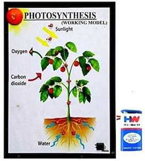 Melody's Photosynthesis Biology Working Science Project-Model