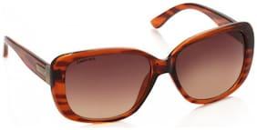 Fastrack Brown Bug Eye Sunglasses