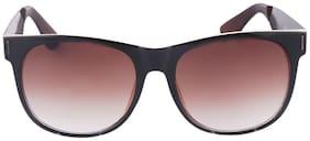 Joe Black Black Wayfarer Sunglasses